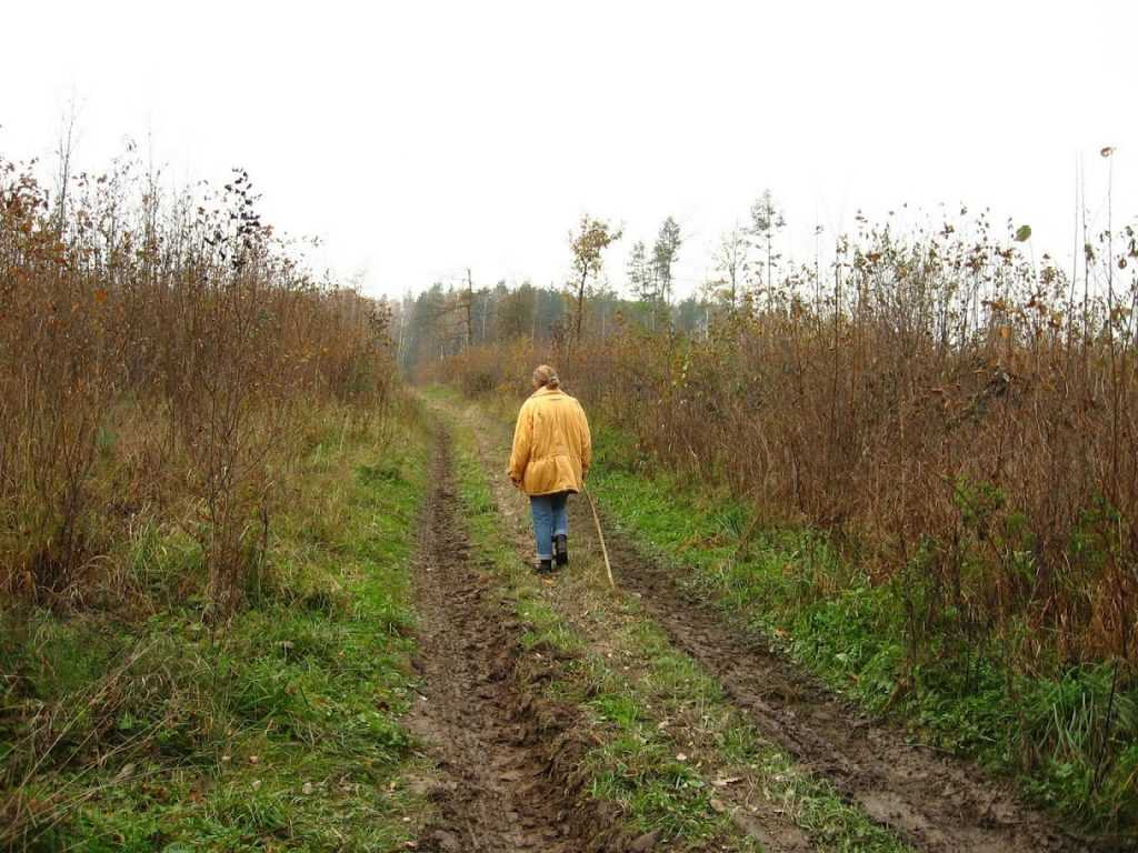 В брянском лесу пропала пенсионерка