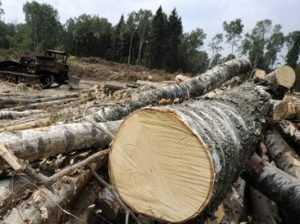 Брянца осудили условно за незаконную вырубку леса на 57 тысяч