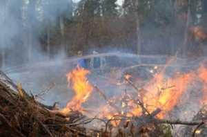 Брянские «зелёные» обвинили арендаторов в незаконном сжигании леса