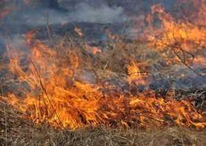 На Брянщине закрыт пожароопасный сезон – торфяники горят