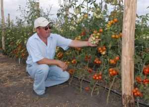 В Брасовском районе Брянской области возродят овощеводство