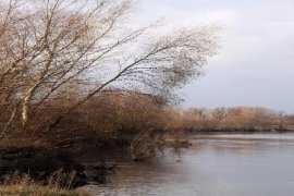 В брянской реке выловили 18-летнего утопленника