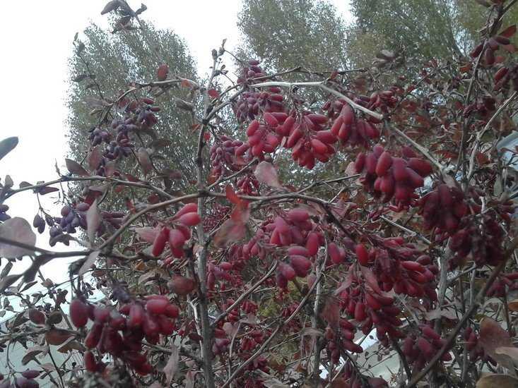 В Брянске сегодня будет тепло и сыро, а на следующей неделе выпадет снег