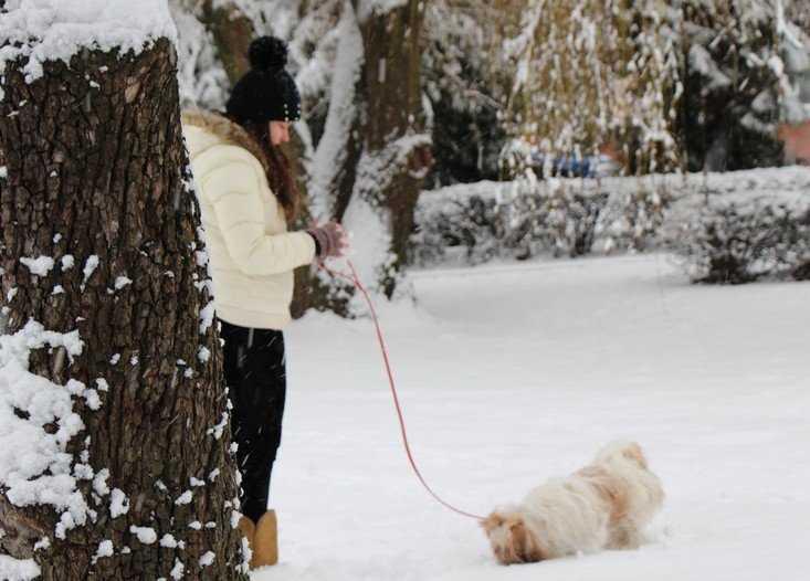 Первый снег брянцы увидят в субботу