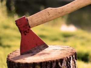 Брянский делец ответил за вырубку леса на 2 миллиона рублей