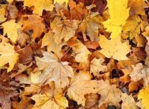 Задержан брянец, задушивший женщину опавшими листьями