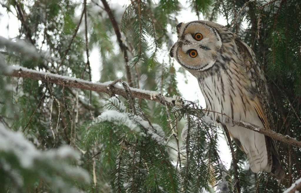 Бешеных зверей в брянских лесах стало меньше