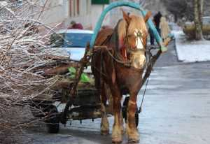 Снегопады и дожди испытают брянцев в ближайшие дни