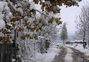 Начало декабря в Брянской области будет теплым, дождливым и снежным
