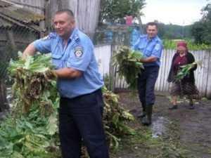 Брянского садовода наказали трудотерапией за выращенный мак