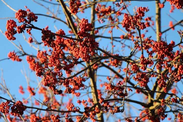 До середины декабря в Брянской области будет необычно теплая погода