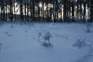 На Брянщине подморозит, и пойдет снег