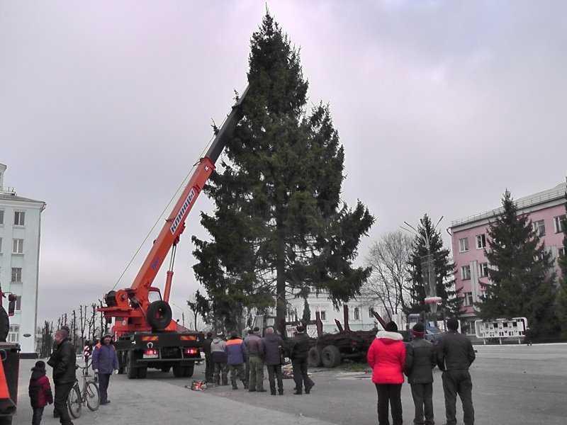 В брянском райцентре установили новогоднюю ель