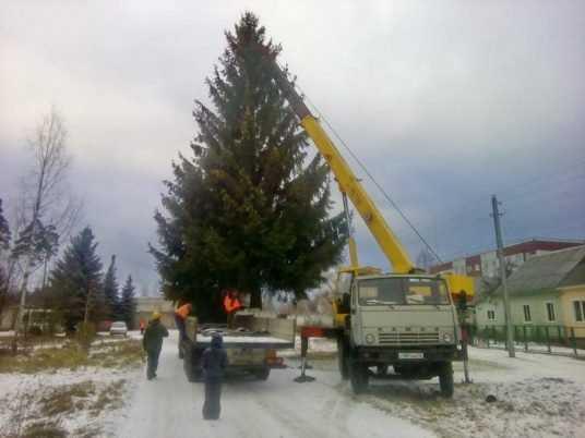 Главную новогоднюю ёлку Брянску подарила семья из Дятькова