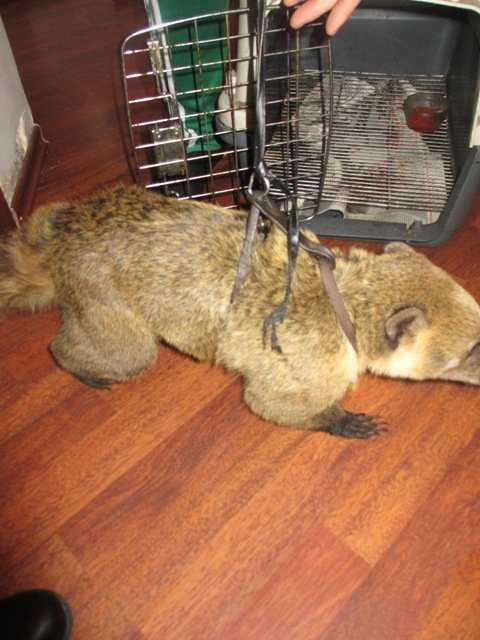 Руководителя цирка в Брянске наказали за нарушение ветеринарных норм