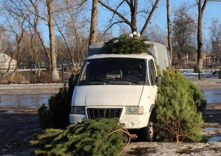 В Брянск вернется теплая осень с дождями