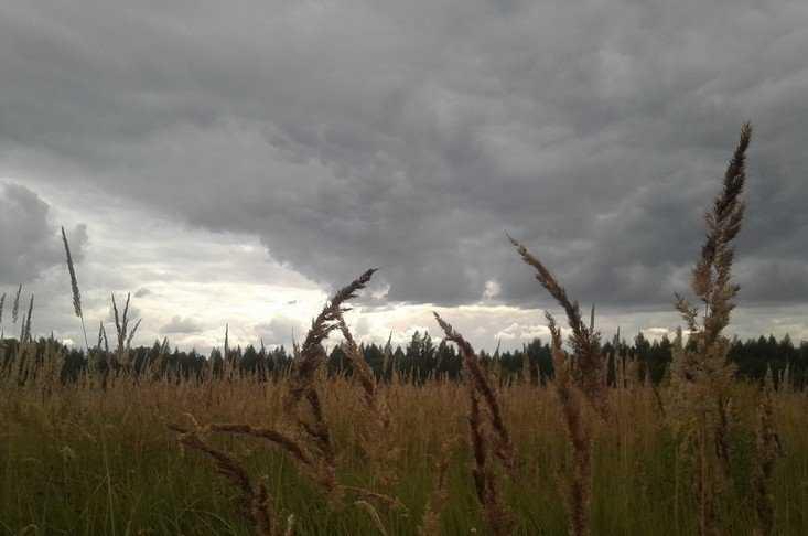 У брянского депутата пригрозили отобрать 500 гектаров земли