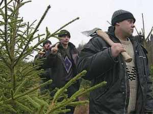 На Брянщине задержали дровосеков, незаконно срубивших сотни елей
