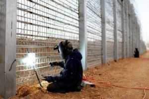 Украинцы возобновят строительство лагерной стены на брянской границе