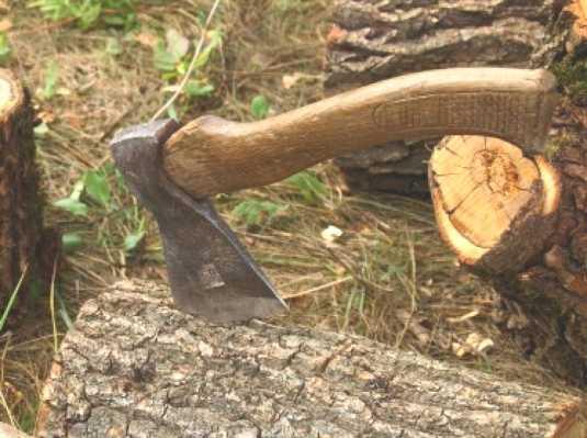 Председатель брянского колхоза ответит за незаконную вырубку леса