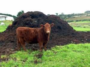Брянской ферме запретили вывозить продукцию