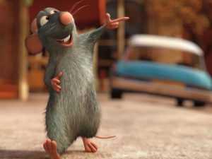 Видеоролик о захвативших Брянск крысах признали самым смешным