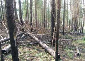 «Фронтовики» попросили мэра Брянска остановить уничтожение лесов