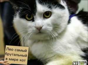Парализованный кот Леонардо навсегда улетел из Брянска в Мюнхен