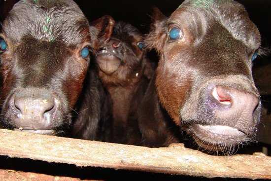 Брянскую область залили опасным молоком