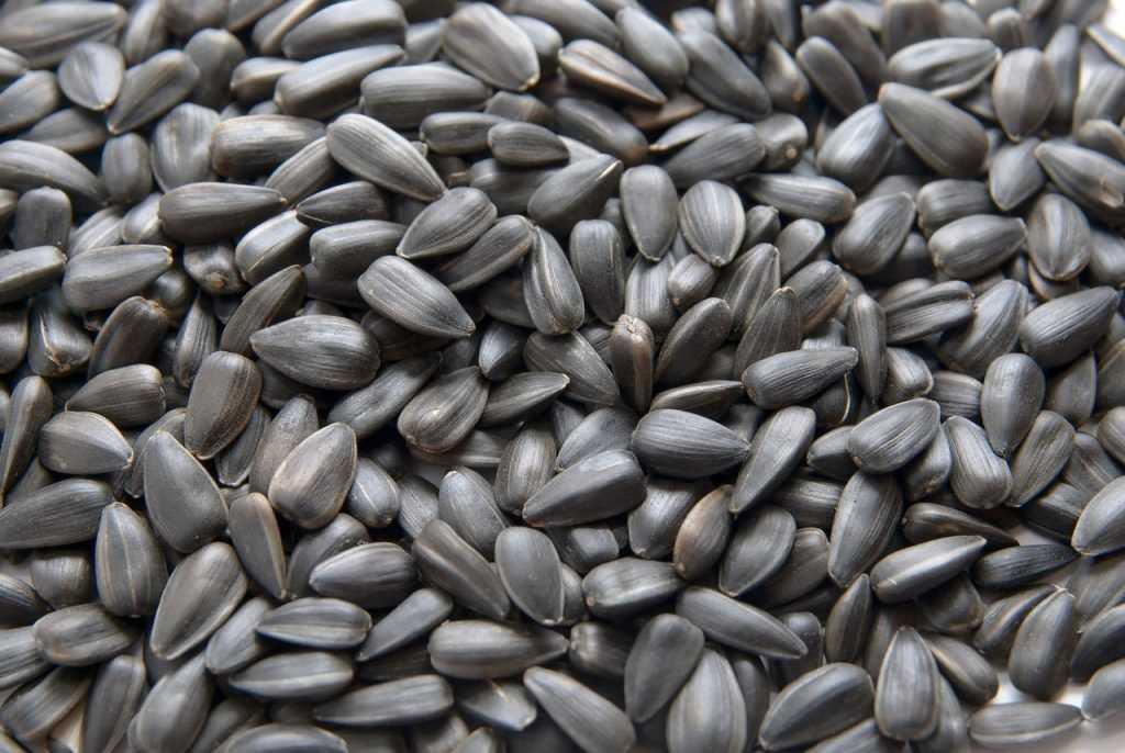 Американские семена развернули на брянской дороге