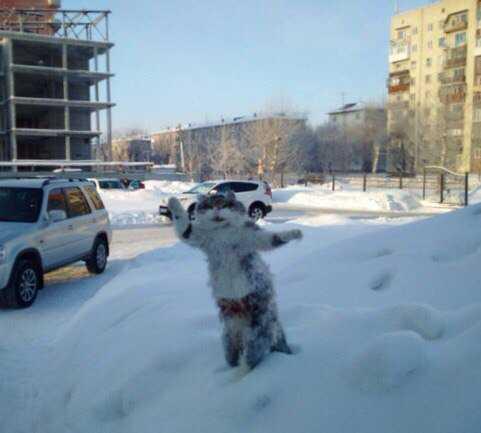 Из мертвого кота сделали памятник зиме
