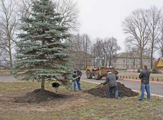 На площади брянского райцентра посадили постоянную новогоднюю ель