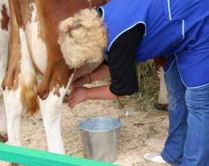 Брянцы выявили в белорусском молоке мел и лекарство