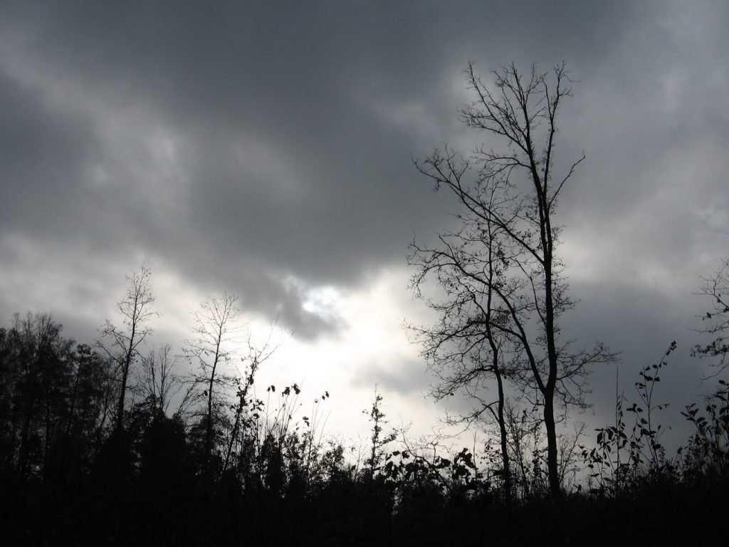 На Брянщине ожидаются дожди и плюсовая температура