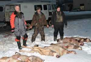 Брянские леса: охотники против волков