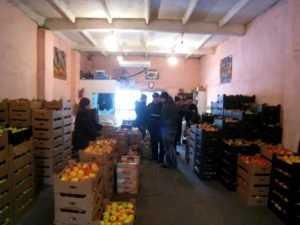 Запретные польские плоды нашли на овощной базе в Брянске