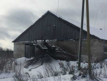Брянскую молочную ферму завалили навозом