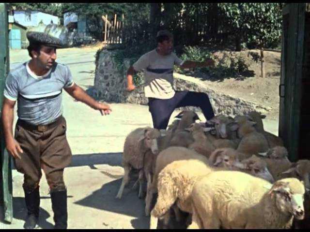 Двоих брянцев будут судить за кражу 232 овец