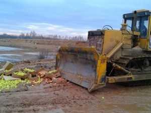 На брянском полигоне уничтожили полторы тонны яблок