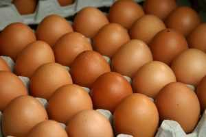 Более 300 тысяч яиц разбились о брянский «камень»