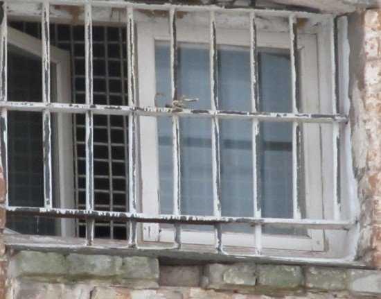 В Брянске будут судить сибирских мошенников, похитивших 1,5 миллиона