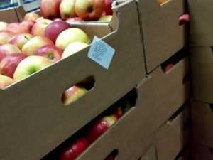 В Брянске загадочно всплыли полтонны польских яблок