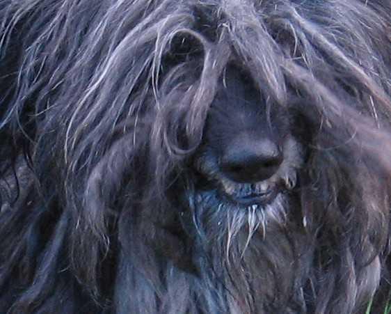В Брянской области бешеная собака покусала хозяина