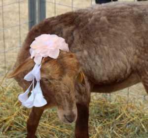 Число брянских ветеринаров привяжут к количеству скота