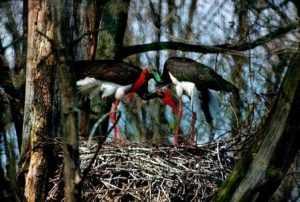 «Брянский лес» включили в список лучших заповедных территорий мира