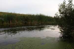 В брянском пруду всплыл утопленник