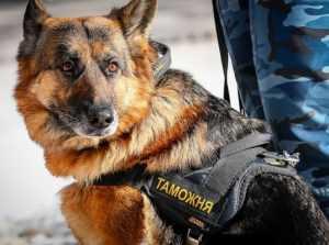 Овчарка помогла брянским таможенникам найти наркотик у бомжа