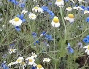 В Брянской области нашли полмиллиона гектаров заросшей земли