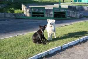 В Брянске началась стерилизация бездомных собак