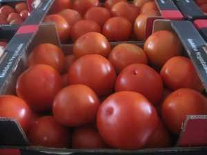 На рынке брянского райцентра нашли запрещенные помидоры